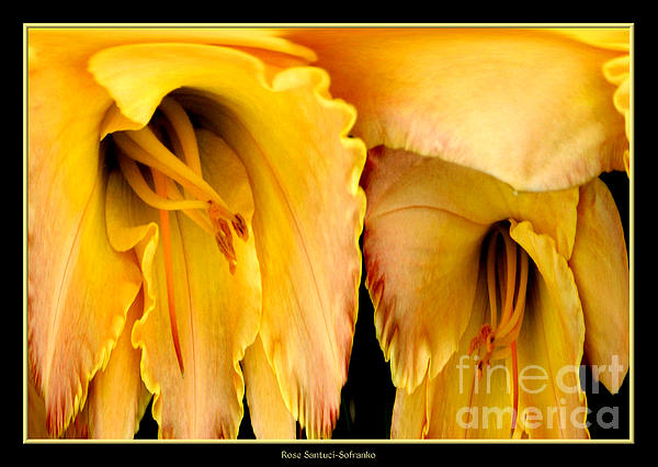Yellow Daylily Abstract Print by Rose Santuci-Sofranko
