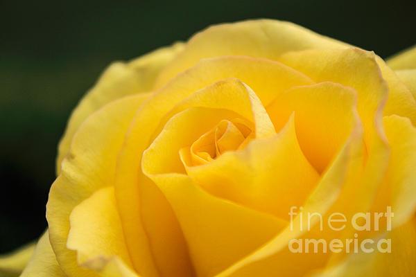 Yellow Delight Print by Arlene Carmel