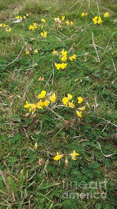 Yellow Flowers Print by John Williams