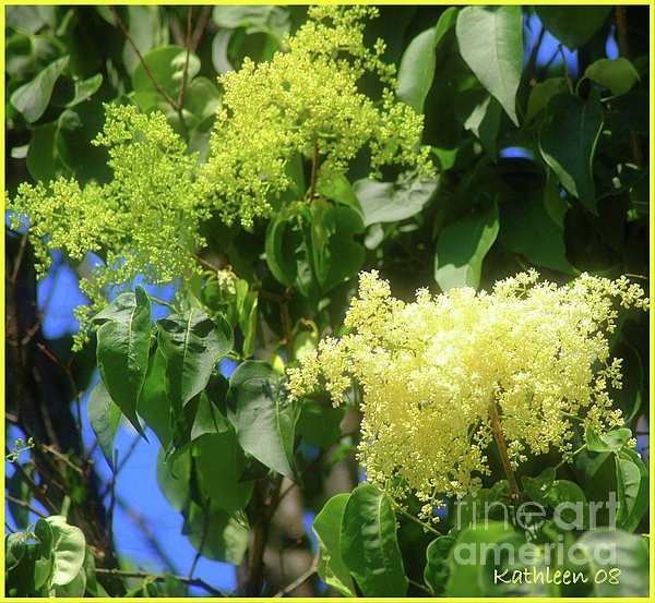 Kathleen Struckle - Yellow Flowers