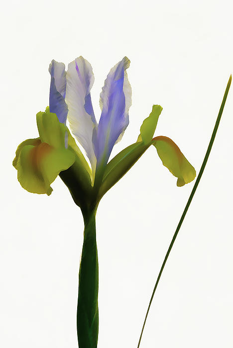 Dennis Reagan - Yellow Iris