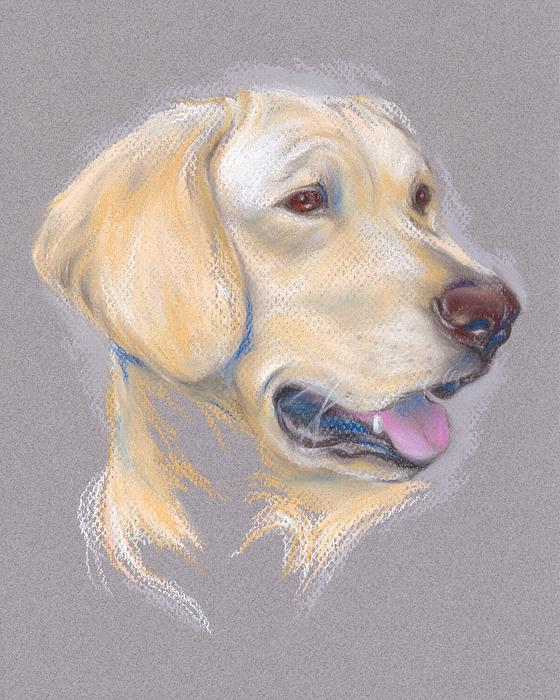 MM Anderson - Yellow Labrador Retriever Portrait
