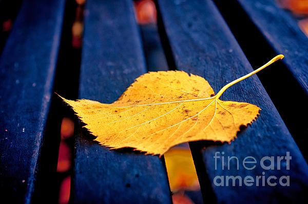 Yellow Leaf On Bench II Print by Silvia Ganora