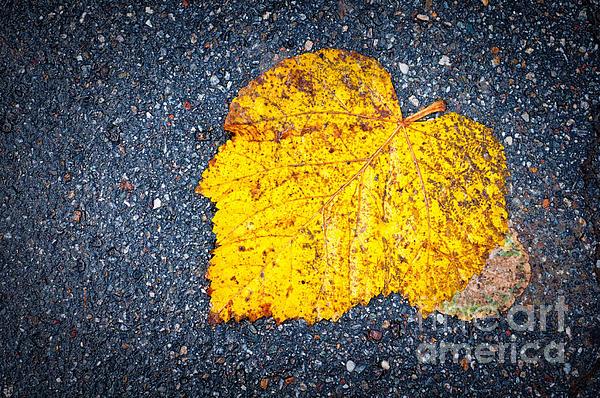 Yellow Leaf On Ground Print by Silvia Ganora