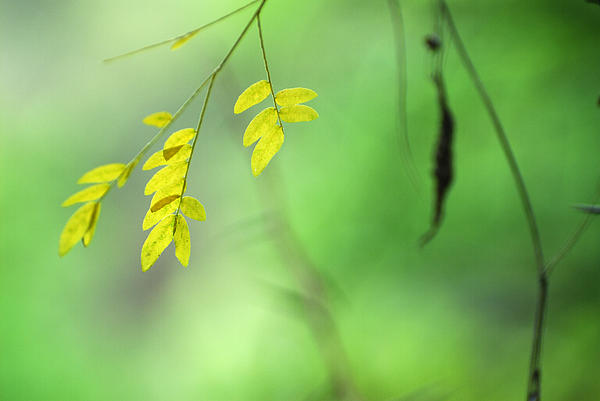 Yellow Leaves Print by Guido Montanes Castillo
