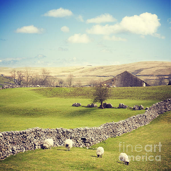 Yorkshire Dales With Dry Stone Wall Print by Colin and Linda McKie