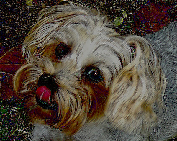 Lesa Fine - Yorkshire Terrier Artwork