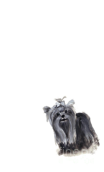 Yorkshire Terrier Print by Barbara Marcus