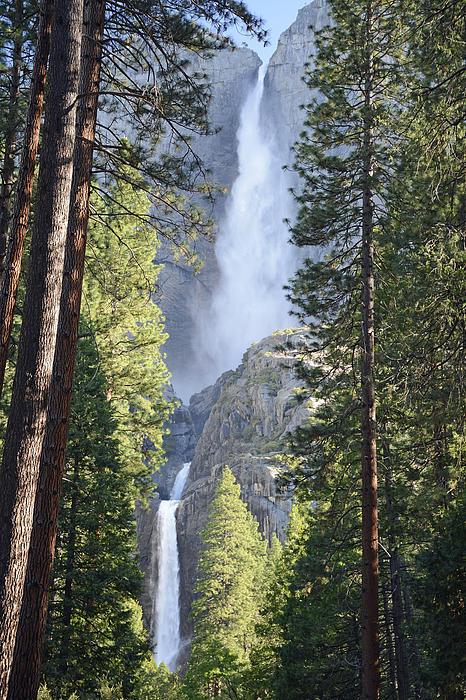 Yosemite Falls In Morning Splendor Print by Bruce Gourley