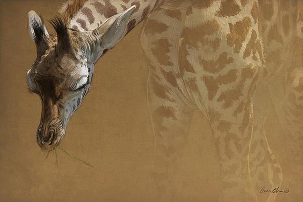Young Giraffe Print by Aaron Blaise