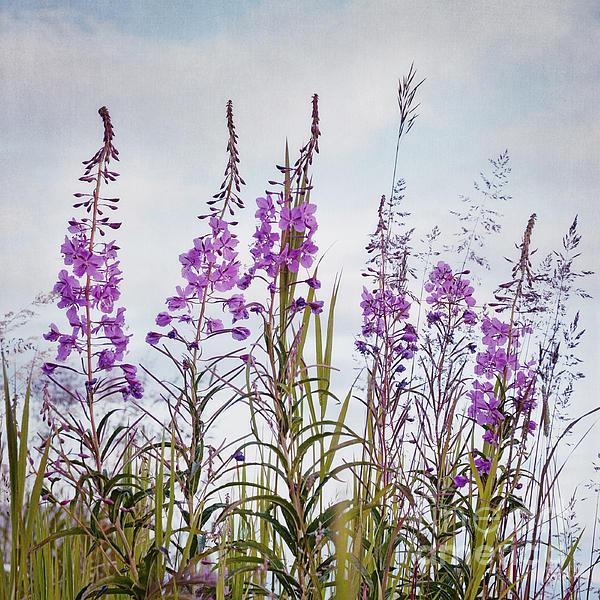 Yukon State Flower Print by Priska Wettstein