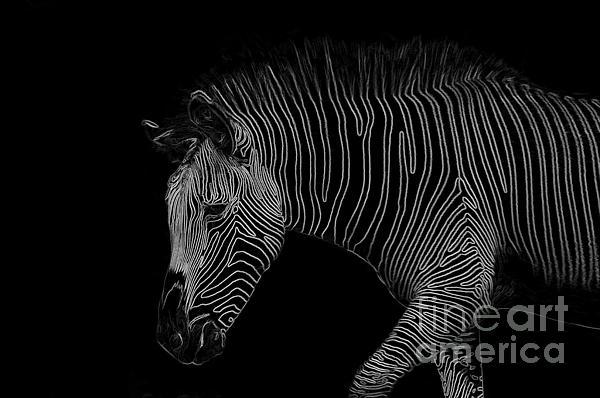 Zebra Art Print by Bianca Nadeau