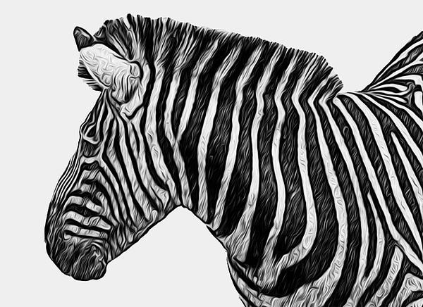 Zebra - Happened At The Zoo Print by Jack Zulli
