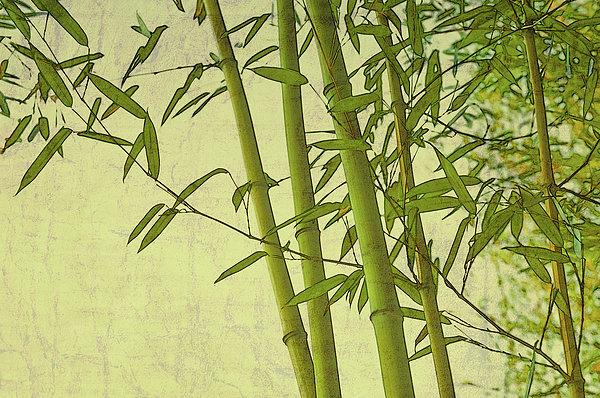 Marianne Campolongo - Zen Bamboo Abstract I