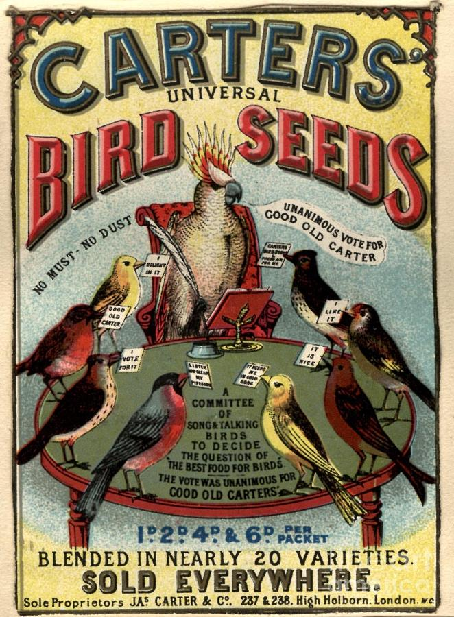 1890�s Drawing -  1890s Uk Carters Bird Seed Birds by The Advertising Archives