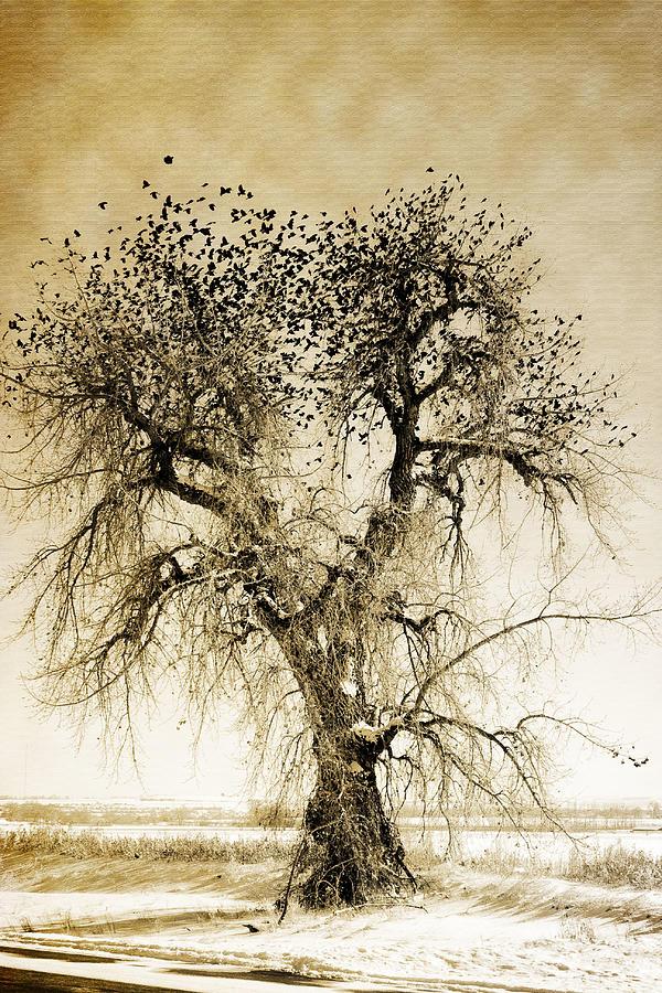 Bird Tree Fine Art  Mono Tone And Textured Photograph