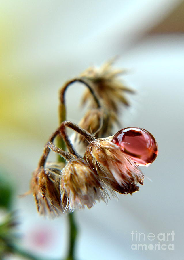 Drop Photograph  -  Drop Fine Art Print
