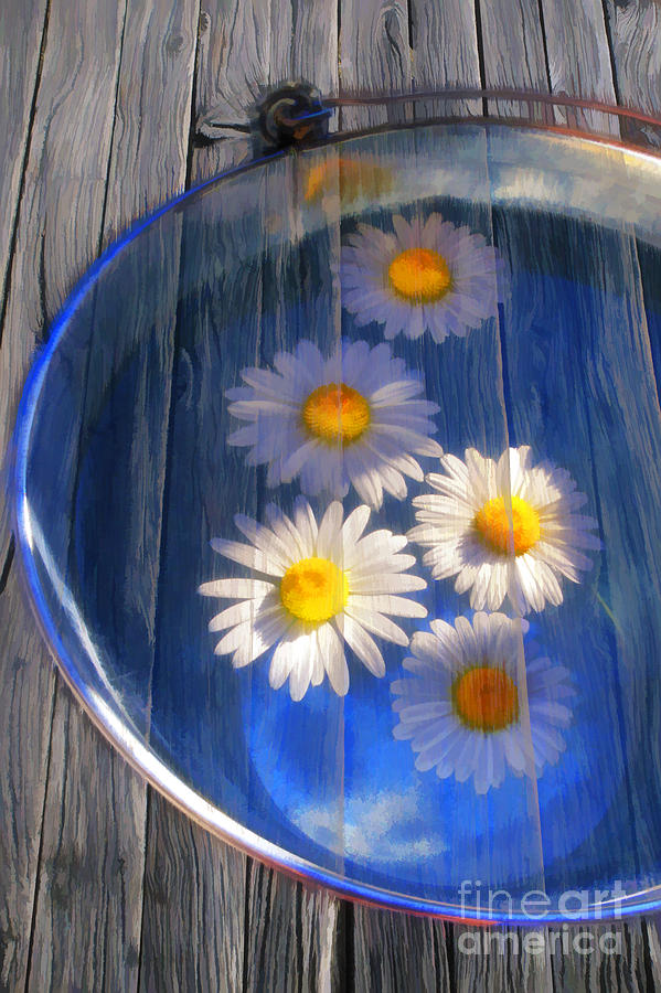 Five Daisies Photograph  -  Five Daisies Fine Art Print