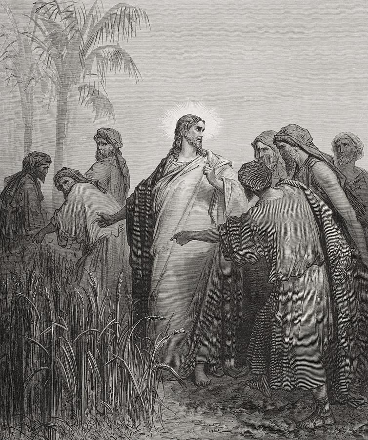 Jesus And His Disciples In The Corn Field Drawing  -  Jesus And His Disciples In The Corn Field Fine Art Print