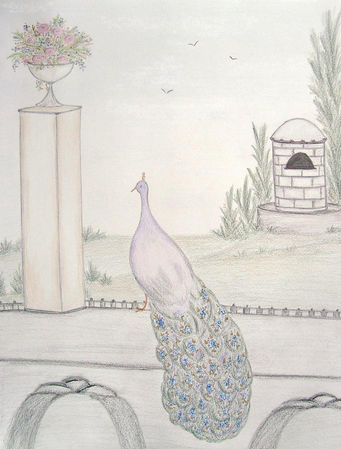 Peacock In An Italian Landscape Drawing