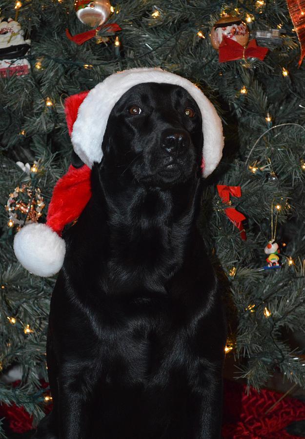 Santas Helper Photograph