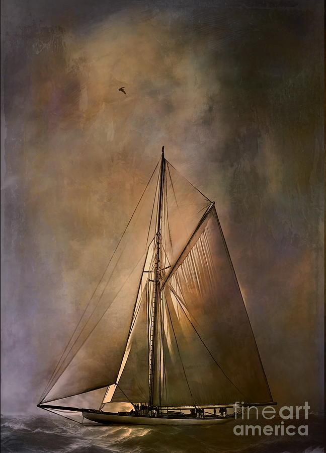 Cutter Painting -  Shamrock II -1901  by Andrzej Szczerski