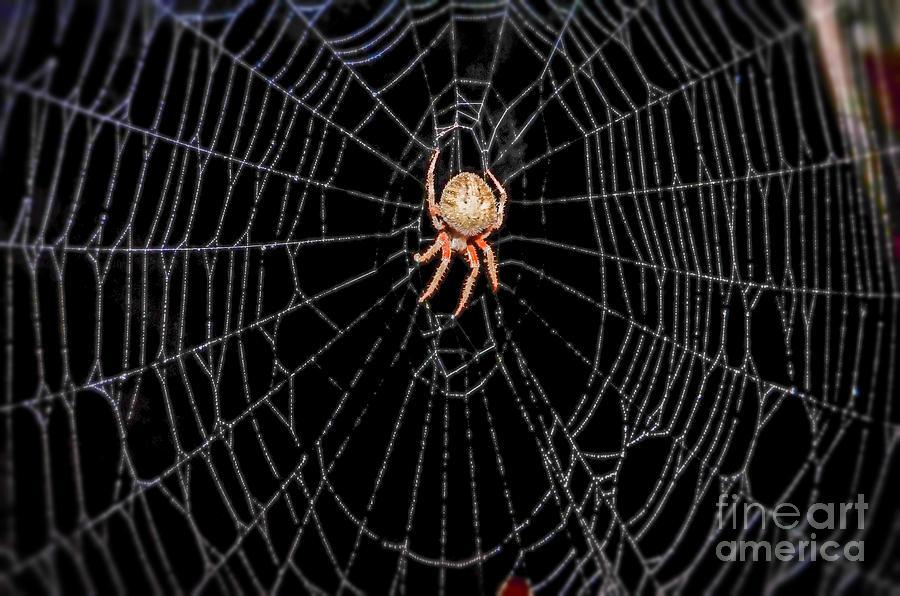 Australian funnelweb spider  Wikipedia