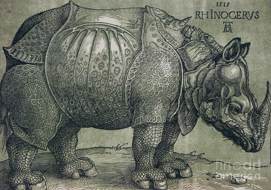 Woodprint; Rhino; Northern Renaissance; Wild; Animal; Mammal; Horn; Endangered Species; Print; Zoology Drawing -  The Rhinoceros by Albrecht Durer