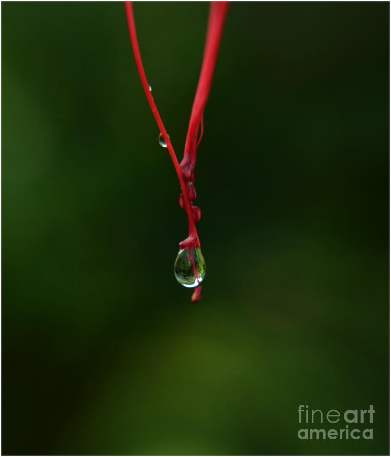 Nature Photograph -  Waterdrop by Michelle Meenawong