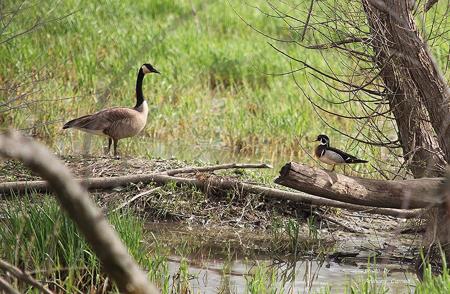Wildlife scenery photograph by anthony cornett for Deer scenery