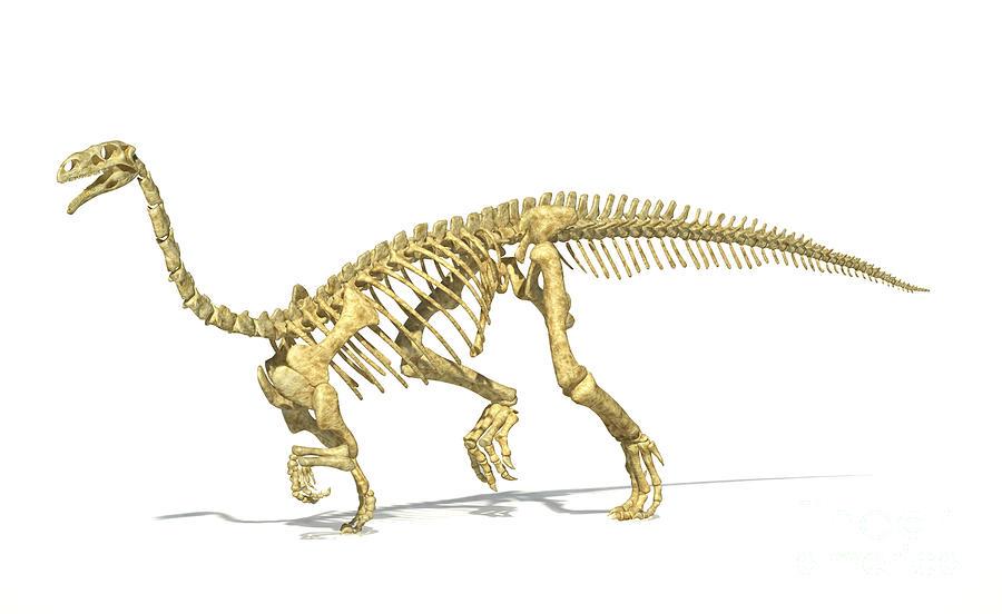 3d Rendering Of A Plateosaurus Dinosaur Digital Art