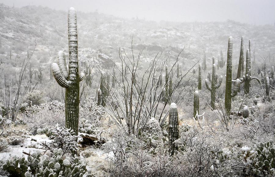 A Desert Snow Day  Photograph