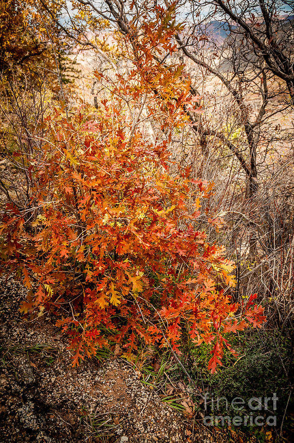 A Touch Of Autumn Photograph  - A Touch Of Autumn Fine Art Print