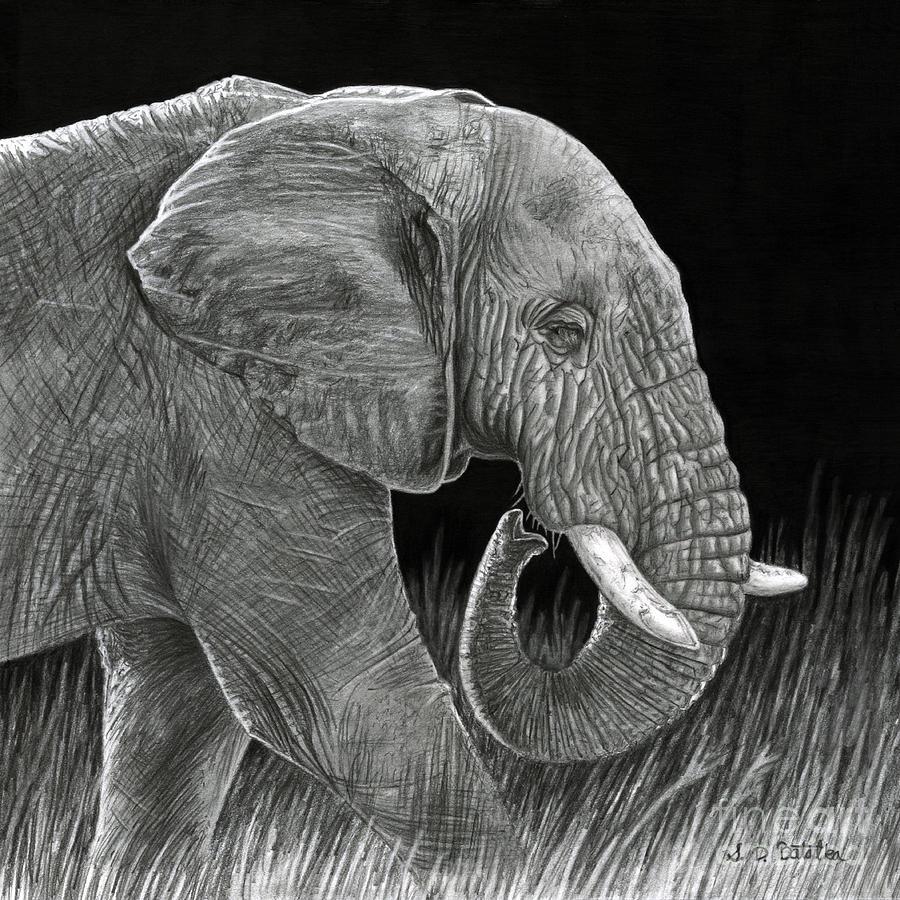 Elephant Drawing - Ancient by Sarah Batalka