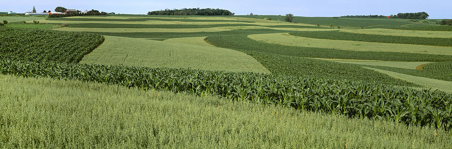 Agriculture - Contour Strips Of Mid Photograph