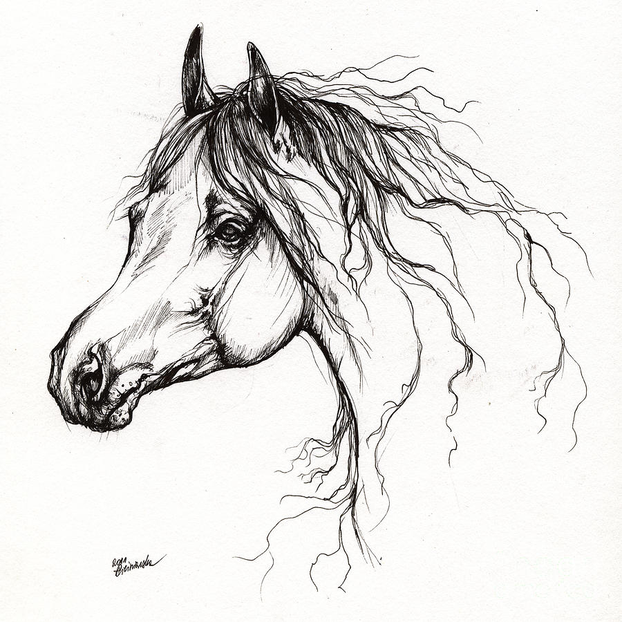 Arabian Horse Drawing 37 Drawing