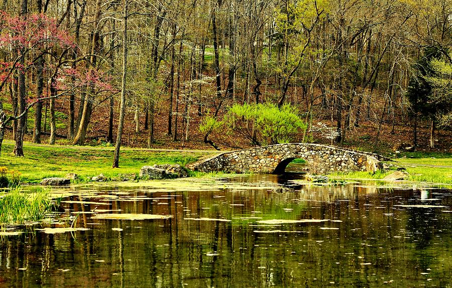 Arkansas Tranquility Photograph