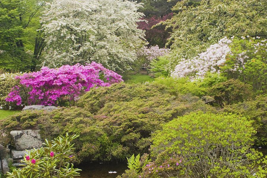 Japanese Garden Photograph - Asticou Azelea Garden - Northeast Harbor - Mount Desert Island - Maine by Keith Webber Jr