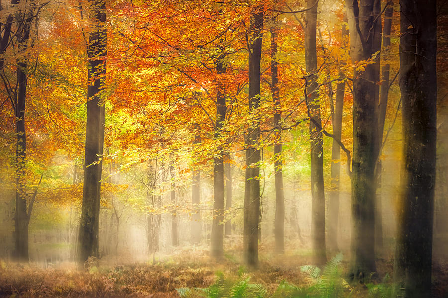 Woodland Photograph - Autumn Gold by Ian Hufton