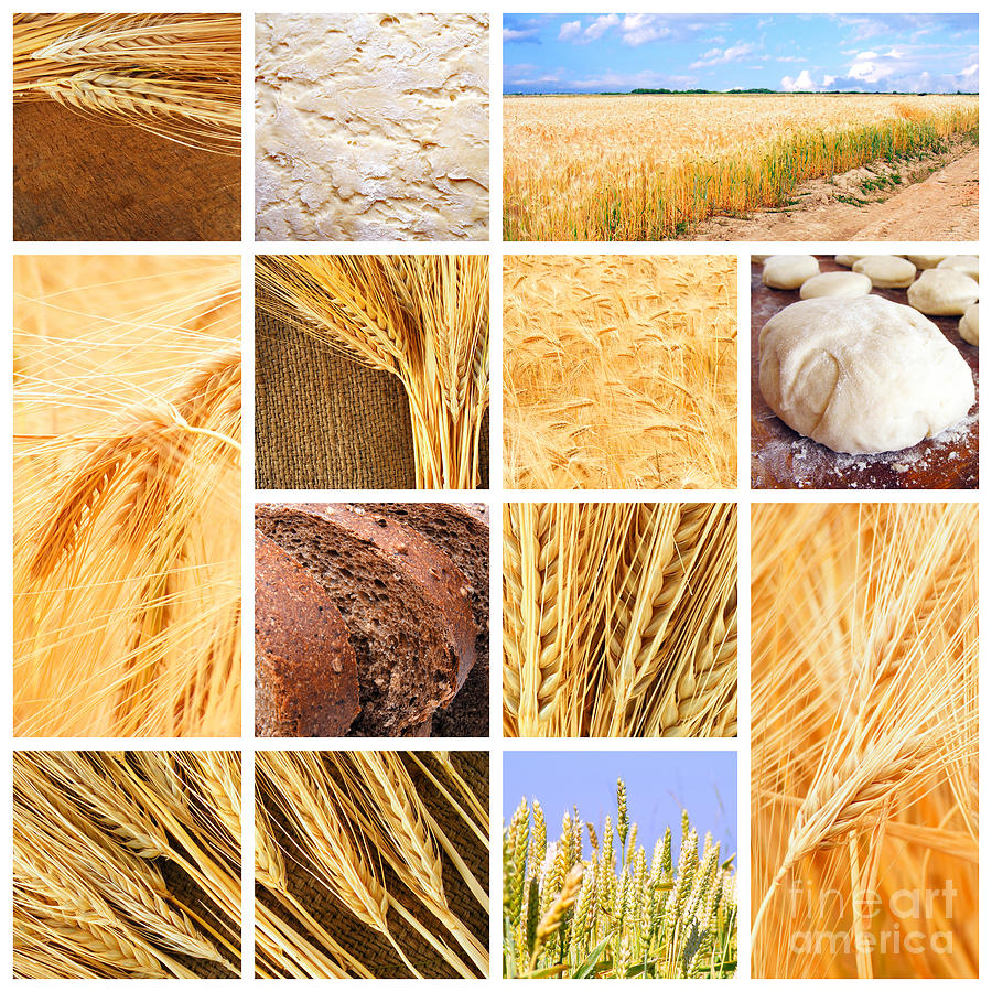 Autumn Harvest Collage Photograph  - Autumn Harvest Collage Fine Art Print