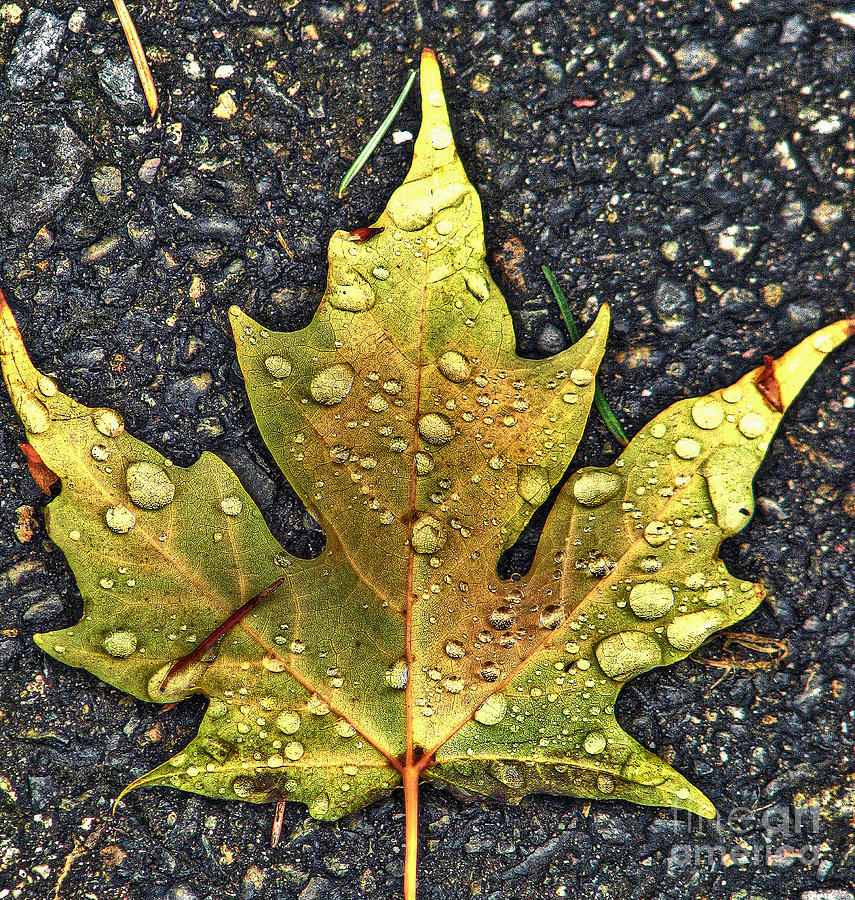 Autumn Leaf Hdr Photograph  - Autumn Leaf Hdr Fine Art Print