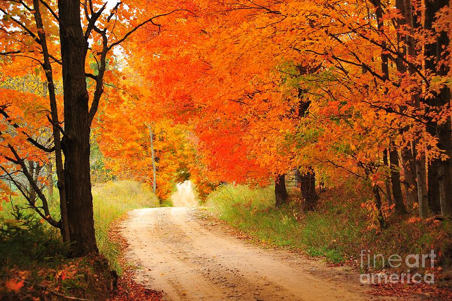Autumn Trail Photograph  - Autumn Trail Fine Art Print