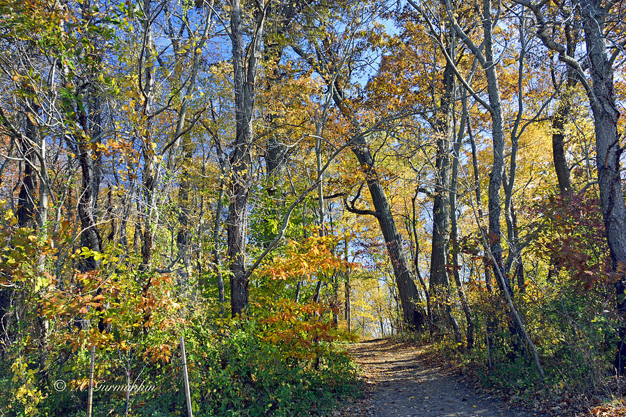 Autumn woodland trail montgomery county pennsylvania by a for Craft shows in montgomery county pa