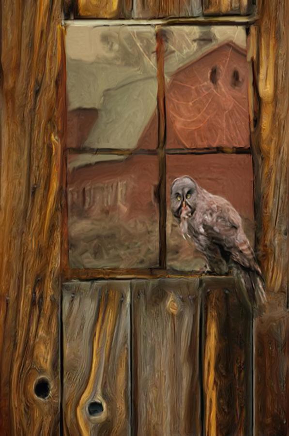 Barn Owl Photograph