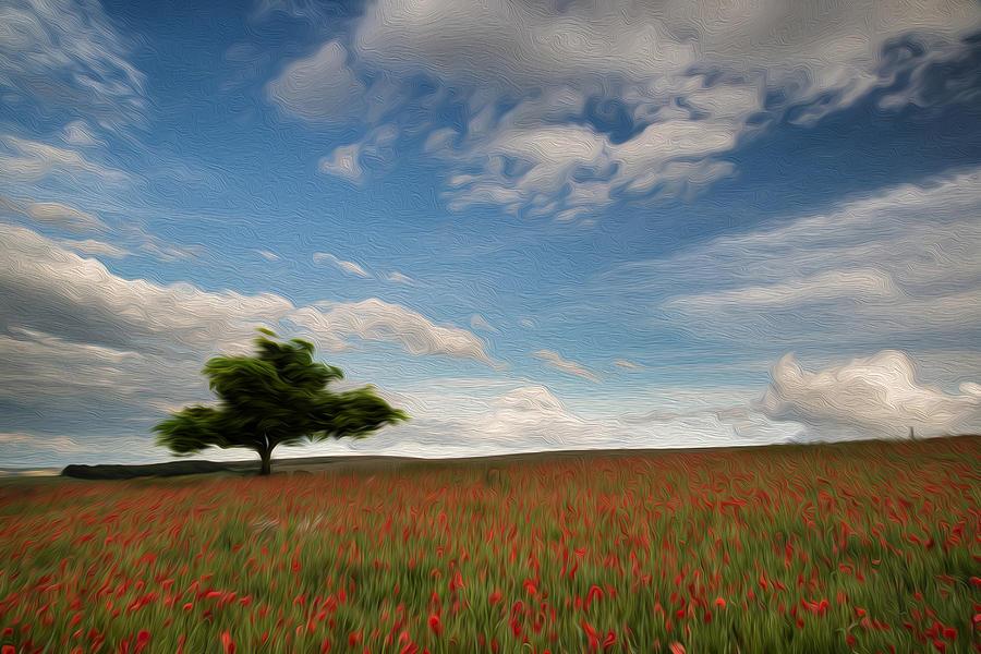 Beautiful Poppy Field Landscape Digital Painting Photograph