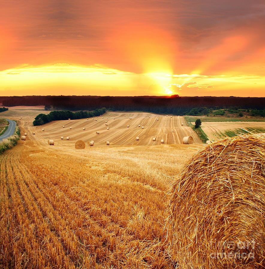 Beautiful Straw Bales Photograph