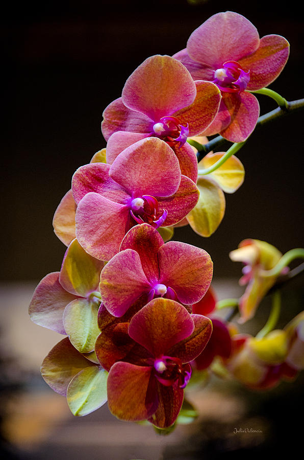 Beauty Of Orchids  Photograph