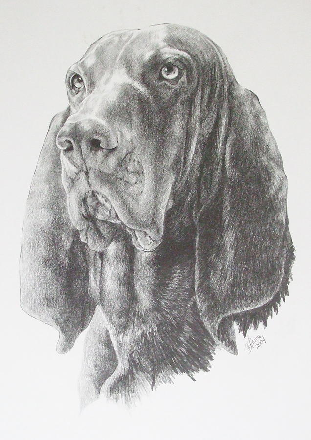 Black And Tan Coonhound Drawing  - Black And Tan Coonhound Fine Art Print