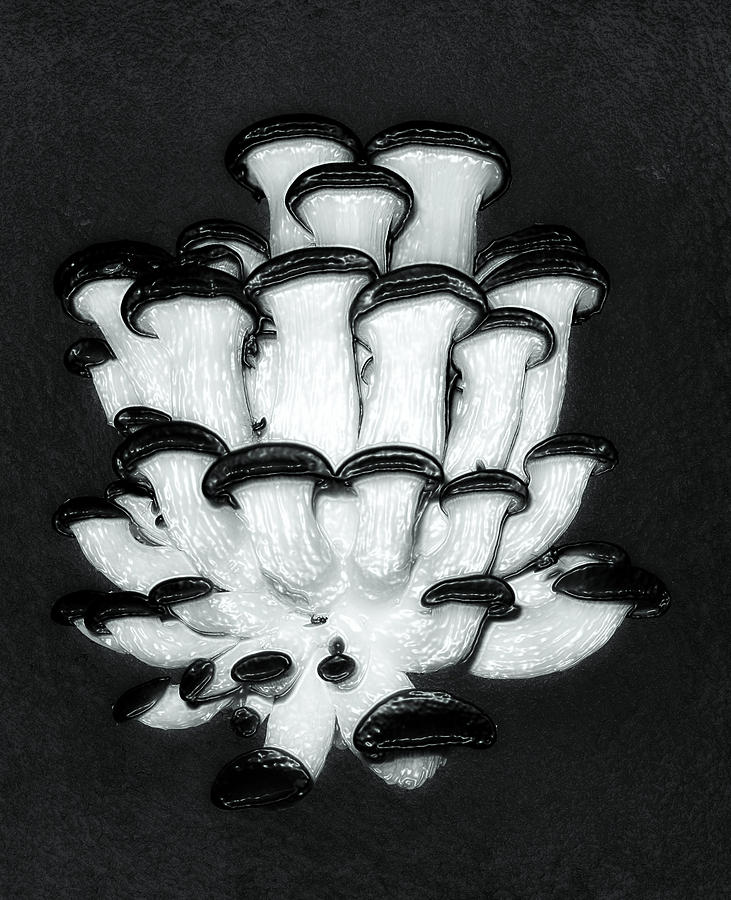 Black And White Mushrooms Photograph