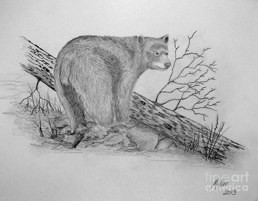 Black bear sketches - photo#5